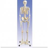 Skelet op verrijdbaar statief.